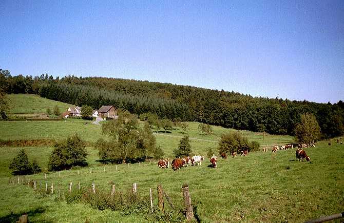[Foto:kuehe-im-wannebachtal.jpg]